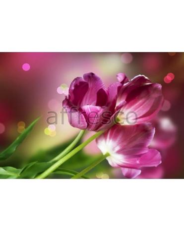 Фотообои, фреска Тюльпаны макросъемка, арт. ID12722