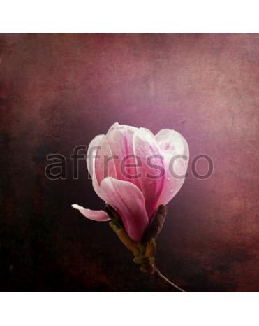 Фотообои, фреска Розовый бутон магнолии, арт. ID13343