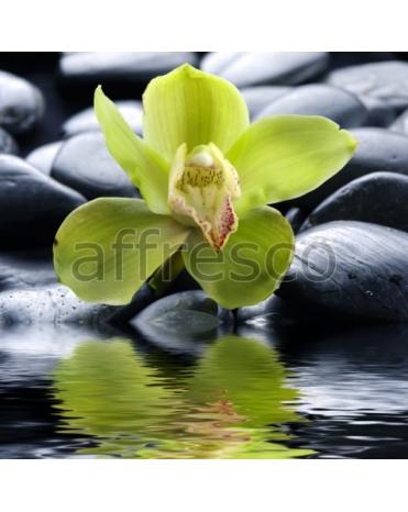 Фотообои, фреска Цветок орхидеи камни, арт. ID11764