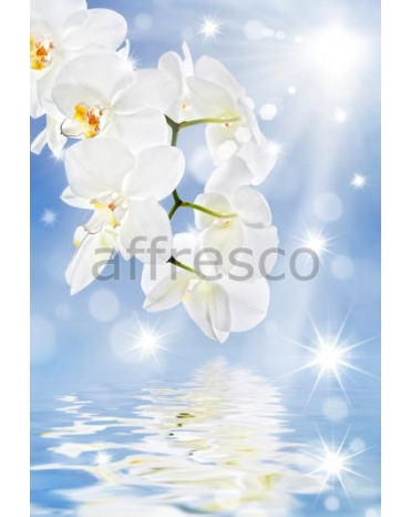 Фотообои, фреска Отражение белой ветки орхидеи, арт. ID11769
