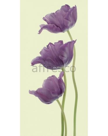 Фотообои, фреска Фиолетовые тюльпаны, арт. ID12800